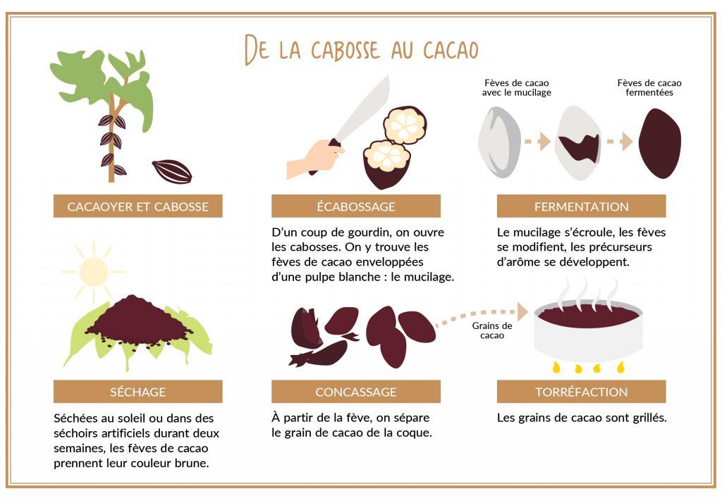 cabosse au cacao